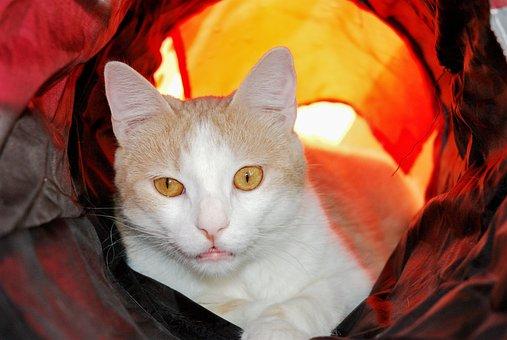 Cat, Eyes, Light, Cat Eyes, Feline, Look