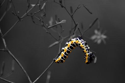 Caterpillar, Nature, Macro, Meadow, Flower, Closeup