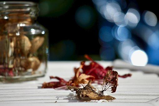 Leaves, Dried Leaves, Maple, Hydrangea Dried, Bokeh