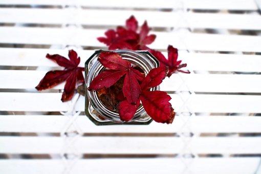 Leaves, Maple Leaves, Jar, Dried Leaves, Autumn
