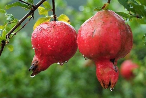 Fruit, Pomegranate, Estrogen, Nature