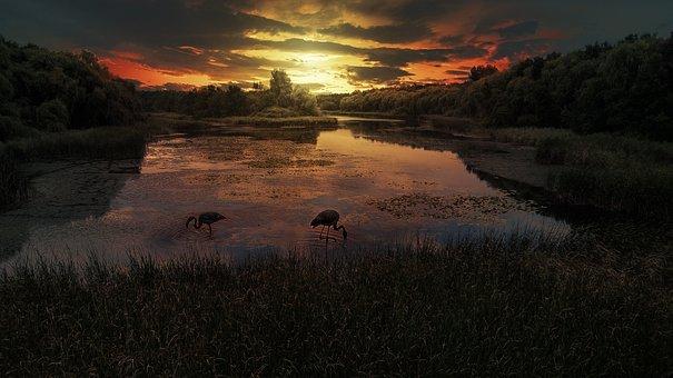 Sunset, Little Balaton, Lake, Natural, Outdoor, Water