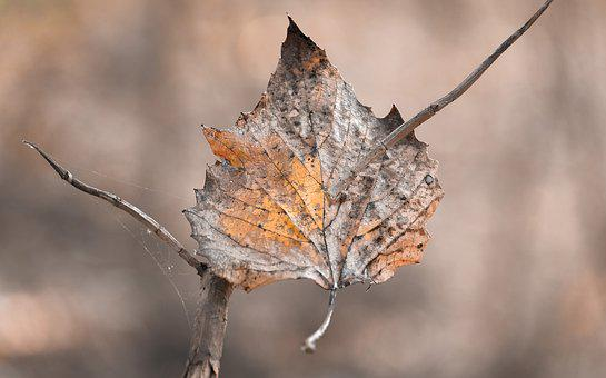 Leaf, Autumn, Nature, Fall, Season, Leaves, Natural