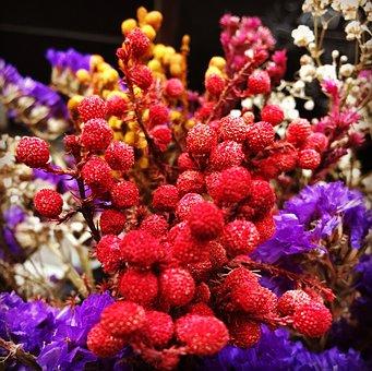 Flower, Colours, Dr, Nature, Spring, Floral, Plant