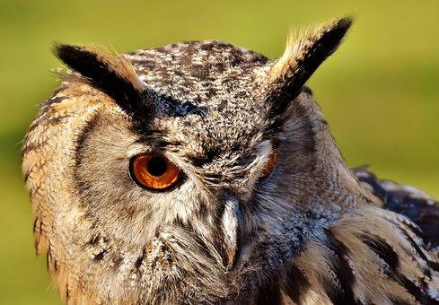 Owl, Bird, Feather, Cute, Plumage, Birds, Animal
