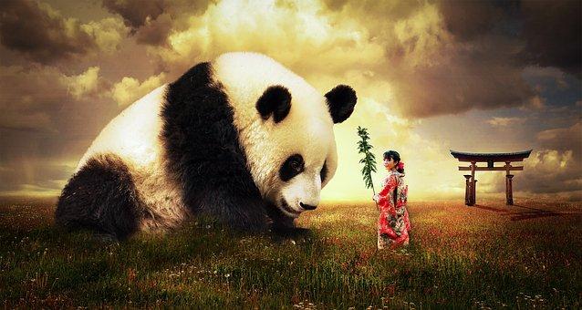 Panda, Bear, Japan, Animal, Cute, Wildlife, Asia