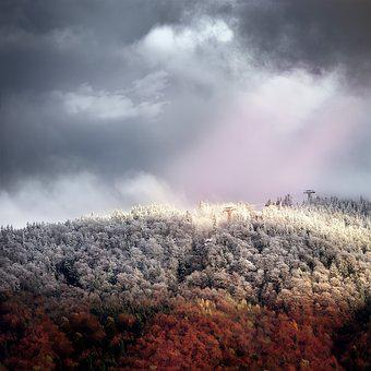 Autumn, Winter, Frost, Forest, Wintry, Nature