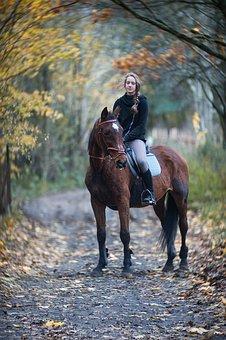 The Horse, Autumn, Horse, Horses, Animal, Landscape