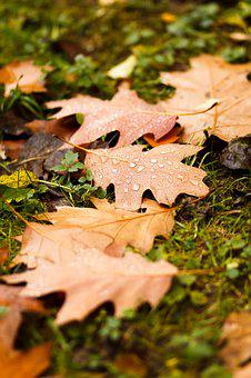 Sheet, Autumn, Listopad, Drops, Rain, Autumn Nature