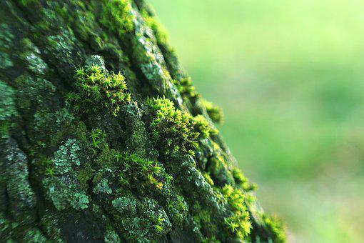 Lichens, The Bark, Tree, Moss, Green, Forest, Old
