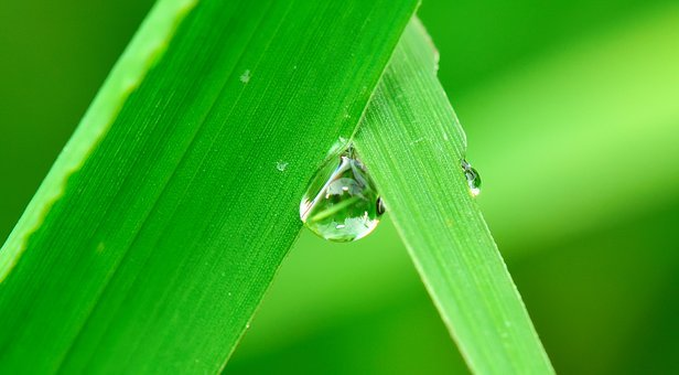 Water, Drop, Grass, Rain, Nature, Wet, Fall, Plant