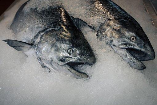 Fish, Frozen Fish, Seafood, Market, Raw, Healthy, Sea