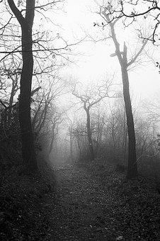 Autumn, Fog, Forest, Trees, Mist, Eerie, Nature