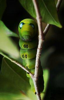 Caterpillar, Moth, Green, Worm, Scary Eyes, Blue Eyes