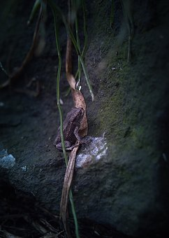 Toad, Nature, Leaves, Gloomy, Mysteriously, Rock