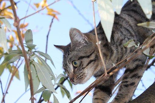 Cat, Animal, Feline, Tabby, Outside, Perched