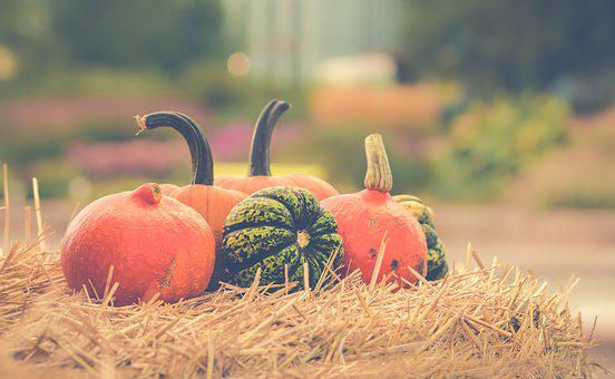 Pumpkin, Halloween, Autumn, Orange, Pumpkins