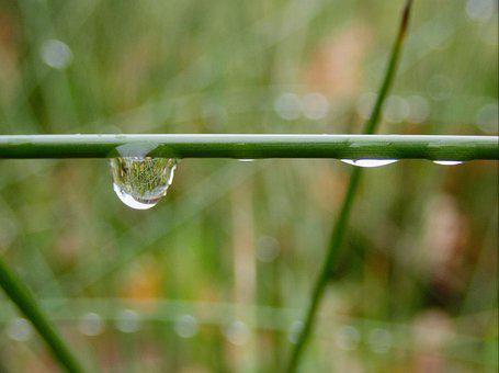 Raindrop, Drop Of Water, Drip, Rain, Blade Of Grass