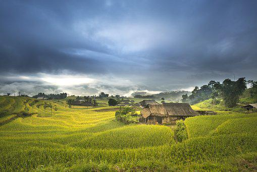 Vietnam, Terraces, Rice, Silk, The Cultivation, Travel