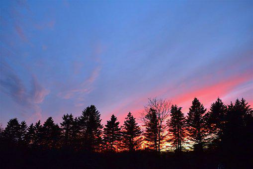 Sunset, Sky, Silhouette, Pine Trees, Clouds, Dusk