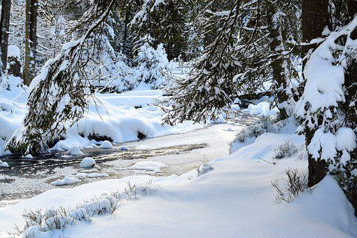 Winter, Landscape, Snow, Forest, Water, Wintry, Nature