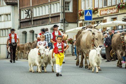 Leaders, Descent, Appenzell, Switzerland, Cows, Sennen