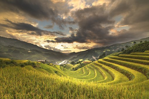 Vietnam, Terraces, Rice, Silk, The Cultivation, Travel