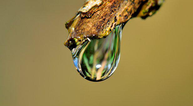 Drop, Water, Grass, Rain, Nature, Wet, Fall, Plant