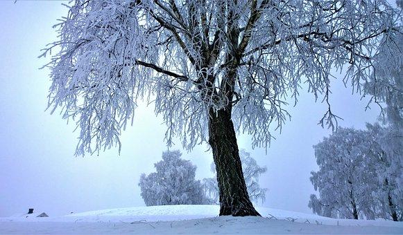 Mist, Winter, Snow, Winter Landscape, Winter Magic