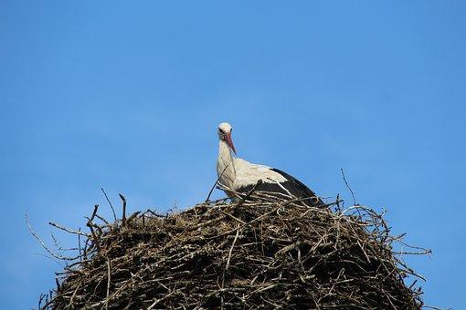 Stork, White Stork, Adebar, Rattle Stork