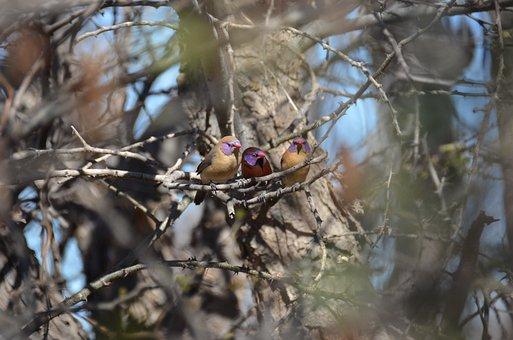Birds, Nature, Africa, Wildlife, Ornithology, Tree