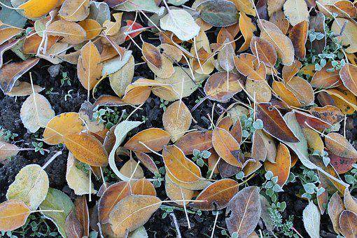 Leann, Autumn, The First Frost, Fallen Foliage