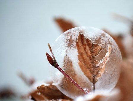 Bubble, Soap Bubble, Frozen, Frozen Bubble, Ball