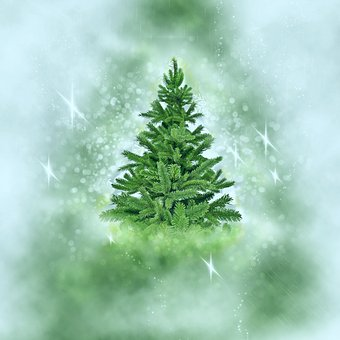 Christmas Tree, Snow, Christmas, Holidays, Winter