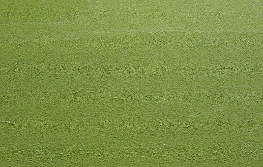 Duckweed, Lemnoideae, Common Duckweed, Lesser Duckweed