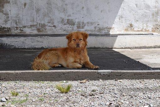 Puppy, Dog, Perron, Pet, Animal, Animals, Bitch, Dogs