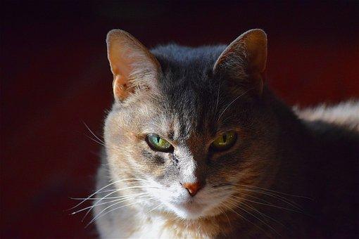 Cat, Portrait, Cute, Animal, Domestic, Pet, Young