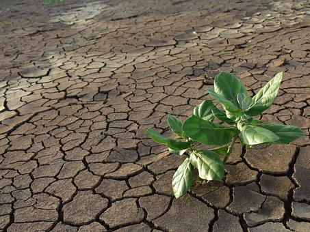 Drought, Dry Mud, Green Plant, Cracked, Dry Land