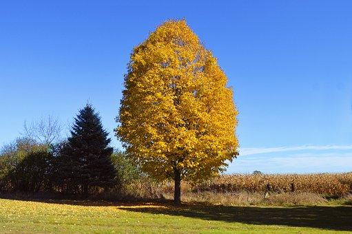 Yellow, Tree, Orange, Leaves, Nature, Autumn, Fall