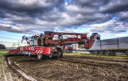 Sugar Beet, Harvest, Glean, Pick, Machine, Agriculture
