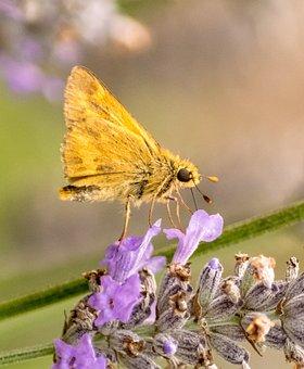 Moth, Orange, Rural, Oregon, Toledo Oregon, Insect