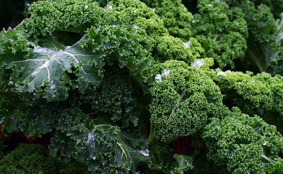 Kale, Frost, Vegetables, Winter Vegetables, Kohl, Green