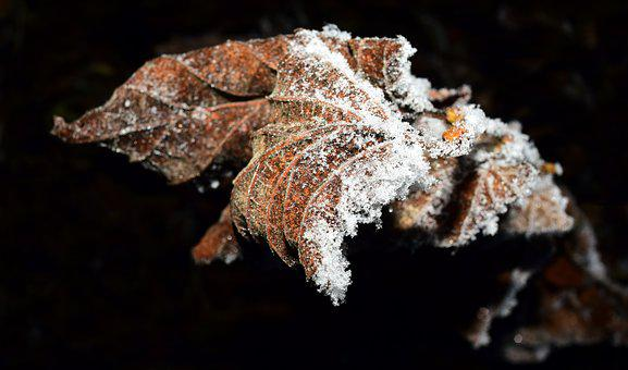 Leaf, Frozen, Frost, Cold, Hoarfrost, Nature, Winter