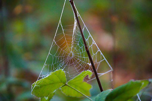 Cobweb, Dew, Autumn, Nature, Network, Morgentau, Moist