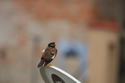Animal, Wild, Wildlife, Ornithology, Wing, Birdwatching