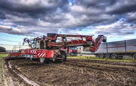Sugar Beet, Harvest, Glean, Pick, Machine, Agriculture