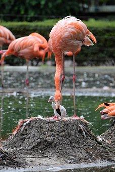 Flamingo, Pink, Pink Flamingo, Water Bird, Bird