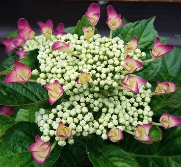 Pink, Pink Flowers, Spring, Garden, Natural, Design