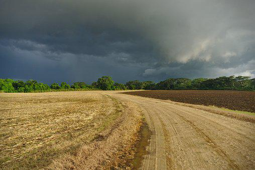 Field, Road, Rural, Landscape, Corn Field, Country