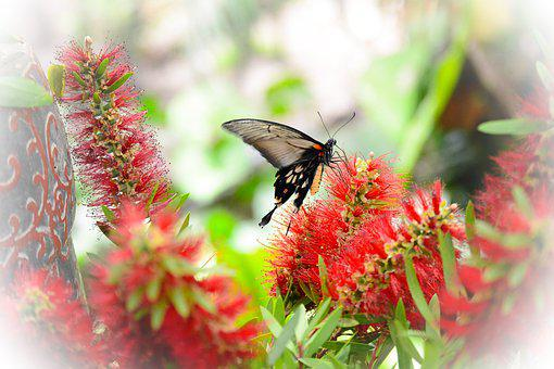 Butterfly, Flowers, Nature, Spring, Summer, Green